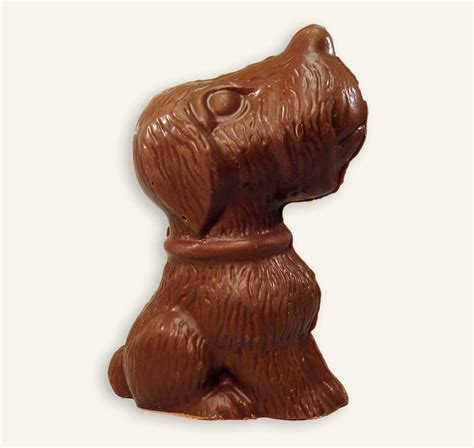 chocolate dogs chocolate