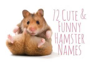 72 cute and funny hamster names funny hamsters animal