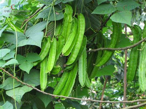 Pupuk Majemuk Untuk Cabe menanam tanaman panduan praktis cara menjaga tanaman