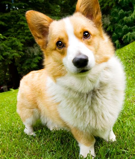 Seizures In Dogs Cats What You Need To