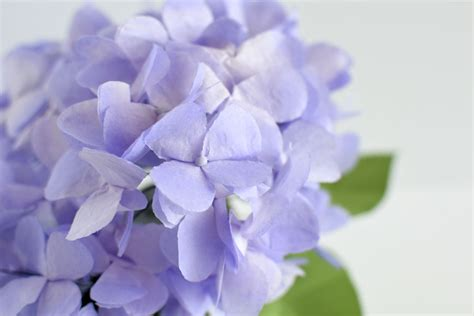 Hydrangea Paper Flower Bloombox diy tissue paper hydrangea improved crafted to bloom
