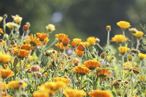 edible flower garden you can eat these edible flower gardens