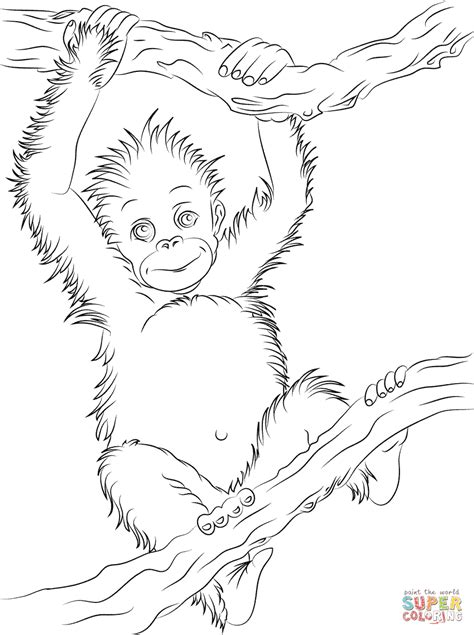 Outline Drawing Orangutan by Baby Orangutan Coloring Page Free Printable Coloring Pages