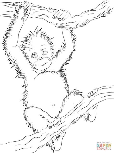 cute baby orangutan coloring page free printable