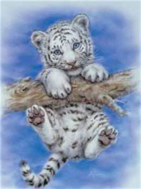 1000 images about white tigers on pinterest white