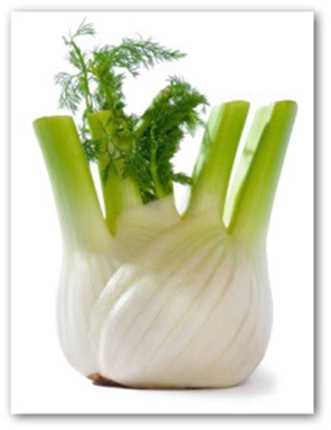 Biji Fennel Adas Easy Grow easy tips for growing fennel yourself