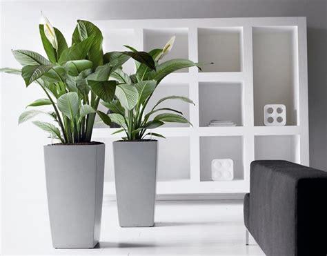 fiori in vaso da interno modelli di vasi da interno vasi da giardino scegliere