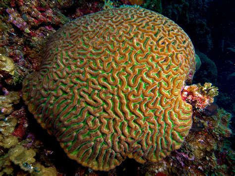 pattern geography exles can coral reinvent the wheel nat geo education blog