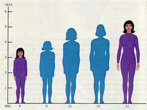 average height average height dimensions info
