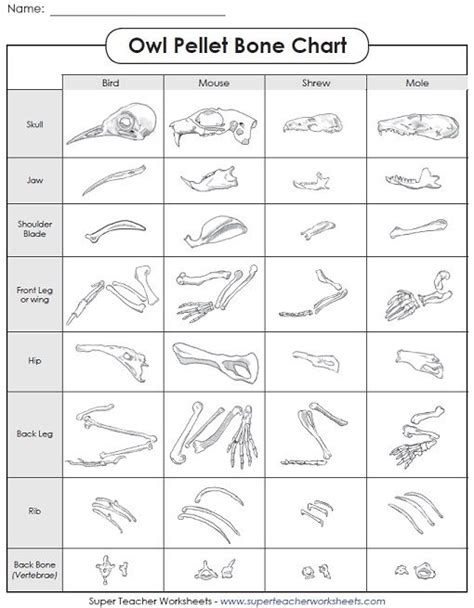Owl Pellet Dissection Worksheet check out our new owls and owl pellet worksheets page in