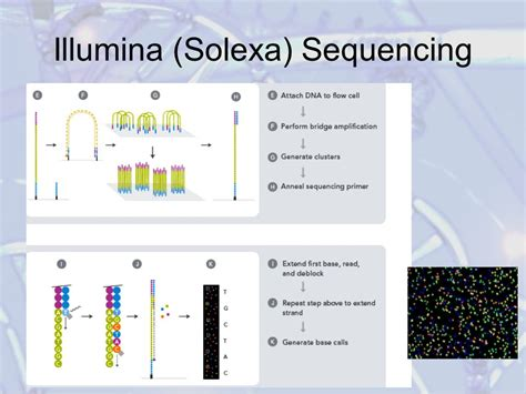 solexa illumina high throughput sequencing technologies ppt
