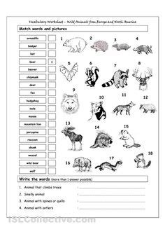 south america map and review worksheet answers 1000 images about america theme for esol students
