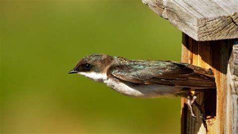 arsenal bird arsenal birds driverlayer search engine