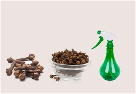 Detox Air Freshener by Detox The Air In Your Home With This Clove Disinfectant