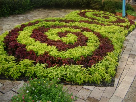 buy coleus in orlando florida lake mary kissimmee sanford