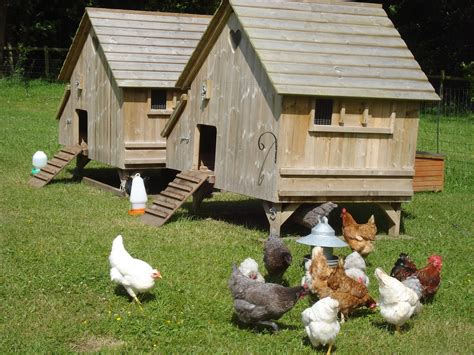 their home our new life in the country our animals and their spaces