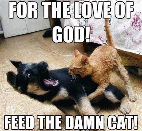 Cheezburger Cat Meme - throw back thursday cat memes i can has cheezburger