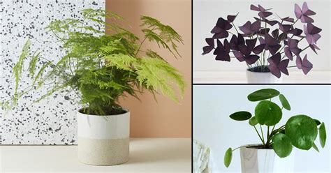 indoor small plants 10 cute small indoor plants small houseplants balcony