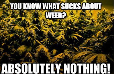 Marijuana Meme - the tuth about hemp memes