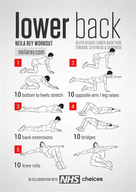 best 25 lower back exercises ideas on