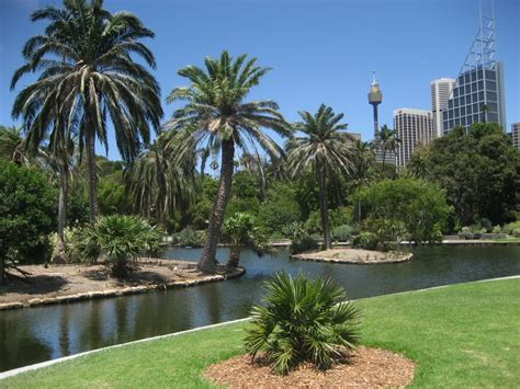 the botanical gardens sydney panoramio photo of sydney botanical garden