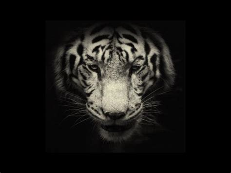 imagenes en blanco de animales 161 en blanco y negro retratan el quot lado oscuro quot de los
