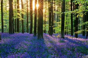bluebell forest photo finish friday bluebell forest of hallerbos by chung hu aethereal engineer