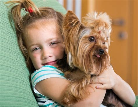 types of yorkies types of yorkie breeds cuteness