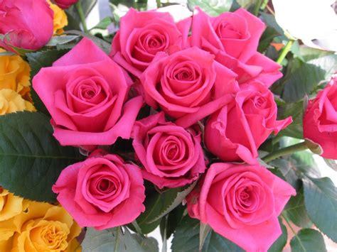 imagenes rosas movibles im 225 genes de flores y plantas rosas