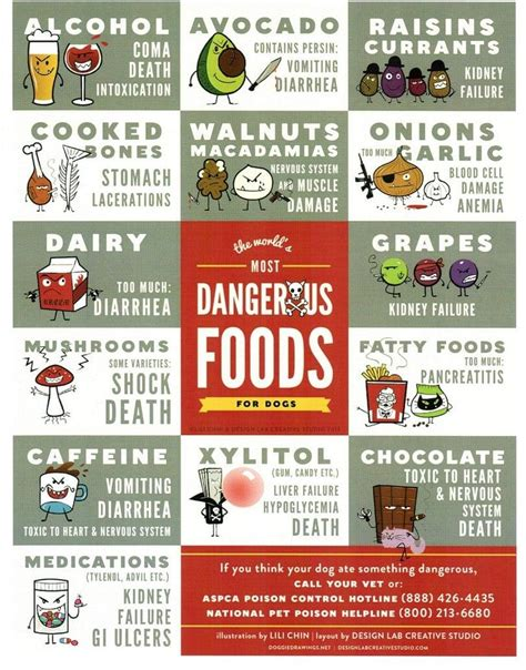 food for dogs what foods are bad for dogs what not to feed dogs in any circumstances