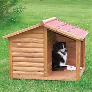 home for dogs dominvrt si pasja uta kot mora biti