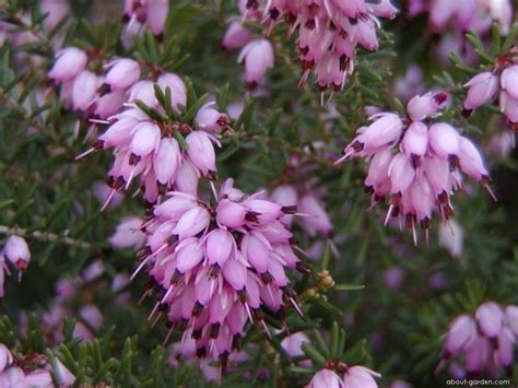 fiori da giardino autunnali giardini autunnali speciali giardini autunnali