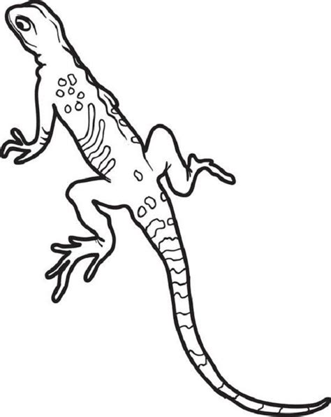 realistic lizard coloring pages 8 best lineart frogs lizards snakes images on