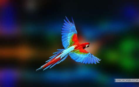 colorful parrot wallpaper colorful parrot desktop wallpapers free wallpapers
