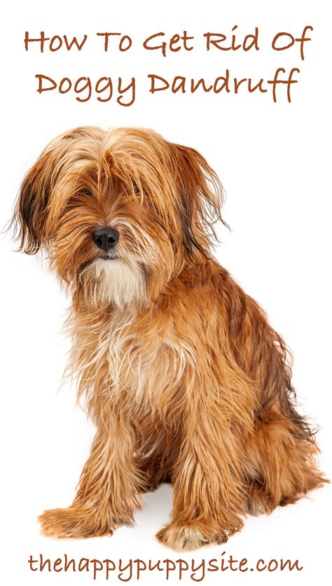 can dogs get dandruff how to get rid of dandruff the happy puppy site