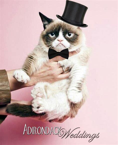 Grumpy Cat Wedding Meme - friday fun with grumpy cat adirondack weddings magazine