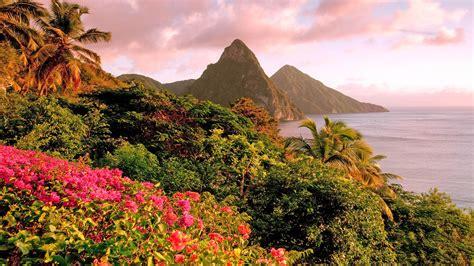 caribbean island  saint lucia tropical flowers piton