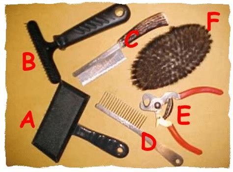 grooming tools for golden retrievers grooming your labrador retriever great tips never shave a labrador silver lab