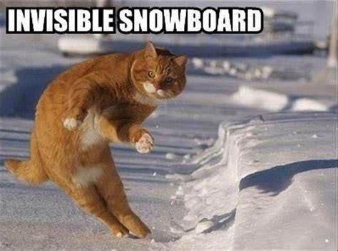 i should buy a boat meme origin image 507704 i should buy a boat cat know your meme