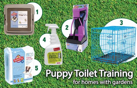 i took my puppy outside before vaccinations the complete guide on how to toilet your puppy my pet warehouse