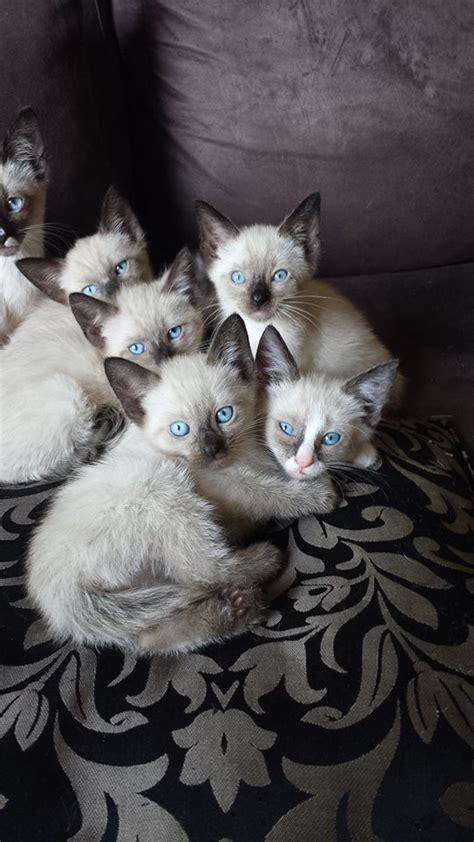 mischlinge suchen neues zuhause katzen mischlinge tieranzeigen
