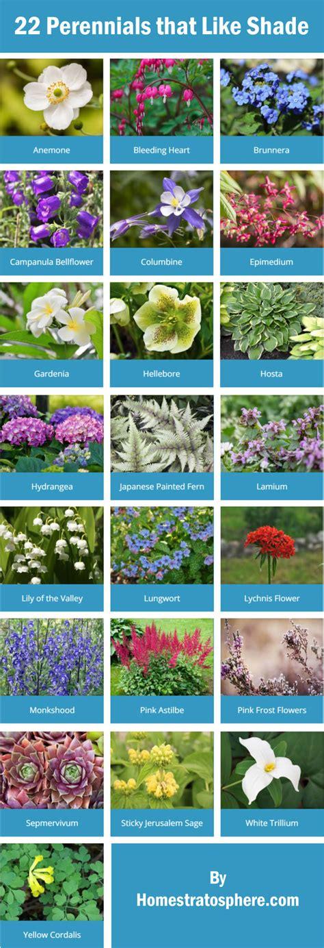 what garden vegetables like shade 22 perennials that like shade gardening zones