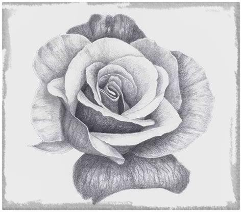 imagenes de rosas sombreadas imagenes de dibujos a lapiz de rosas dibujos de amor a lapiz