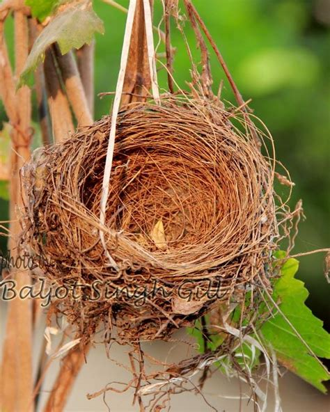home of home of bird photography baljot singh gill touchtalent