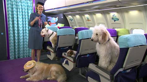 puppy on plane dogs on a plane