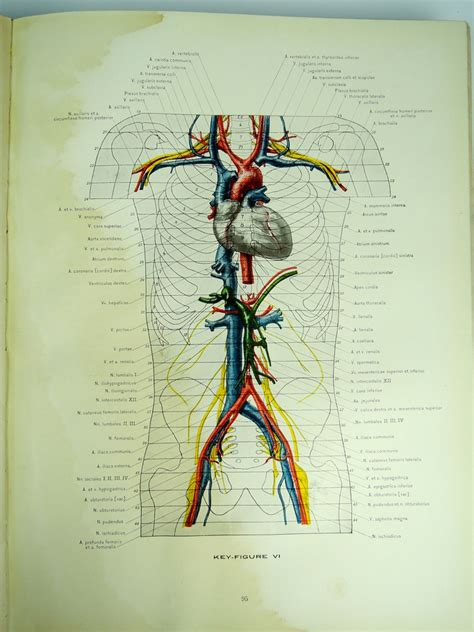 cross sectional anatomy book antique 1911 cross section anatomy book