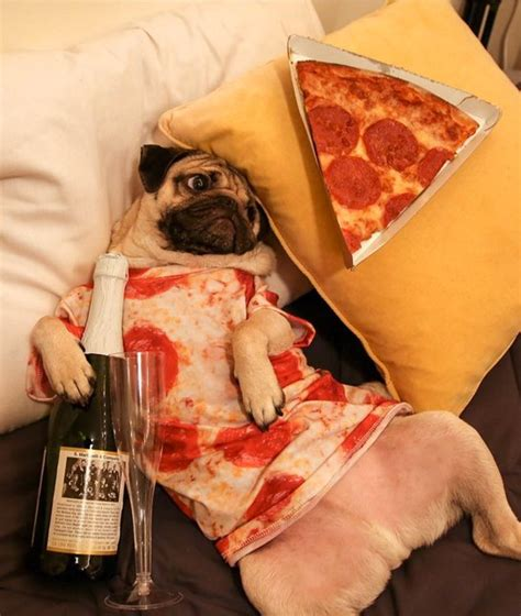 puppy pizza 15 dogs who pizza the hangover