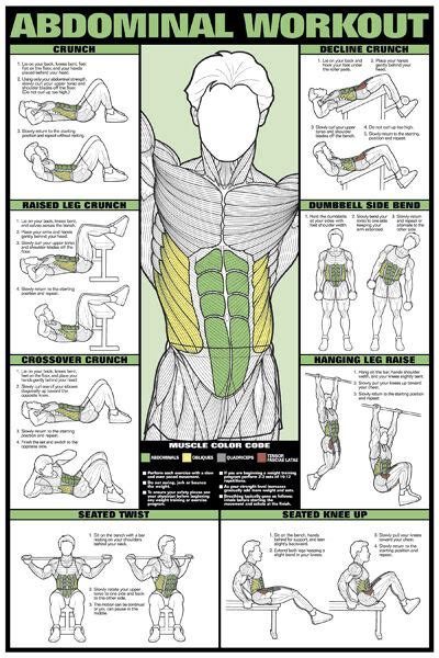 abdominal workout wall chart professional fitness training gym poster ebay