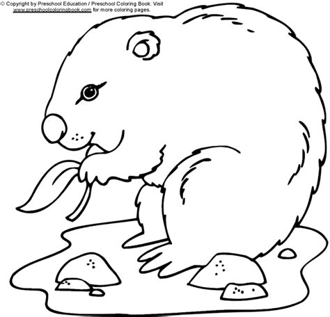 groundhog coloring pages preschool www preschoolcoloringbook com groundhog day coloring page