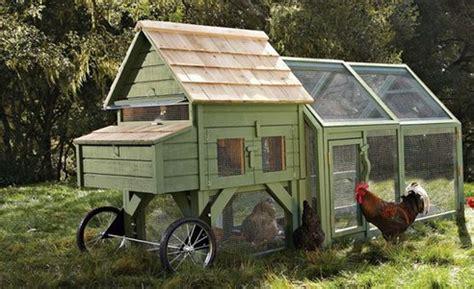 backyard chicken farming how to raise baby a beginners guide to backyard